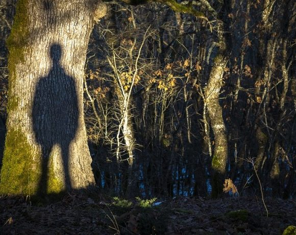 Ghost Forest: What Actually Is It?