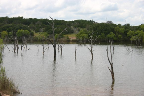 ghost forest (Wikimedia Commons)