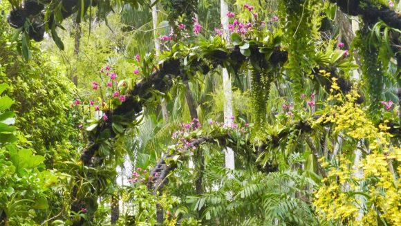 tree-green-singapore-zoo-orchidea-arcs-