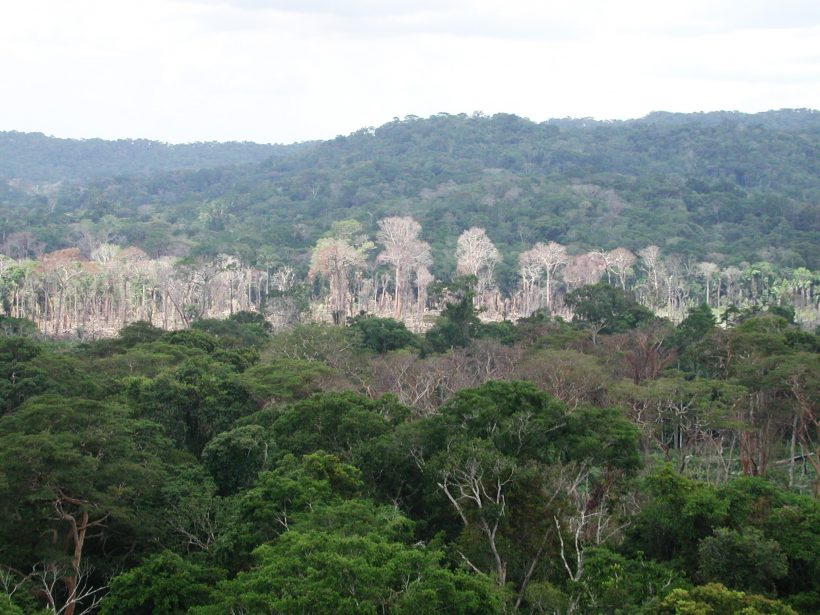 Amazon Rainforest Can Be The Next Epicenter Of 'New Coronavirus'