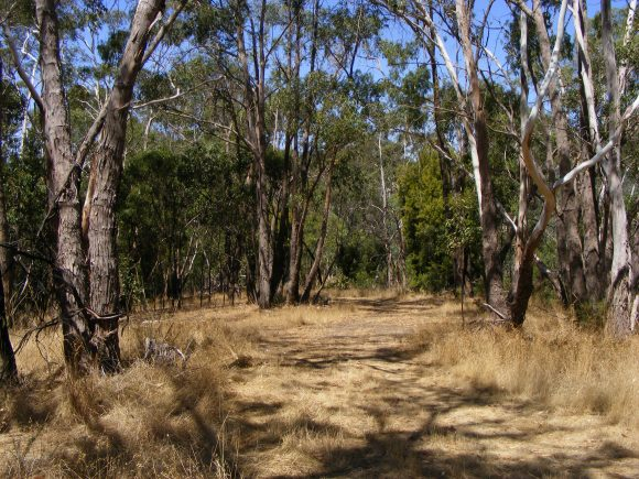 Open_woodland_ (Wikimedia Commons)