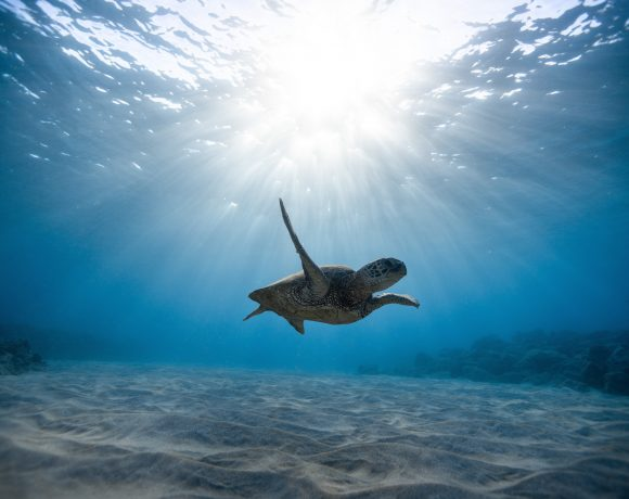 Brace Yourselves, We've Got New Victories for Sea Turtles