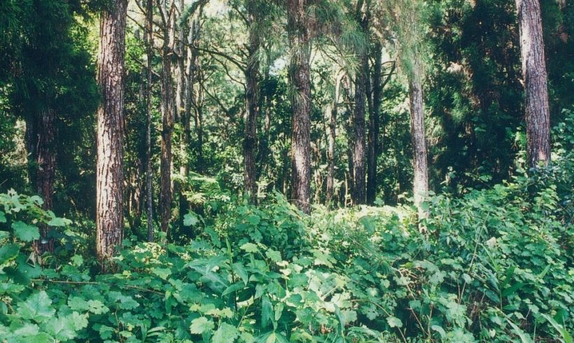 Australia's Decision To Protect Their Woodlands After Decades Of Waiting