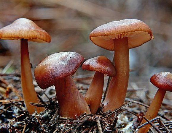 Understanding Underground Fungi Network For Fighting Global Warming