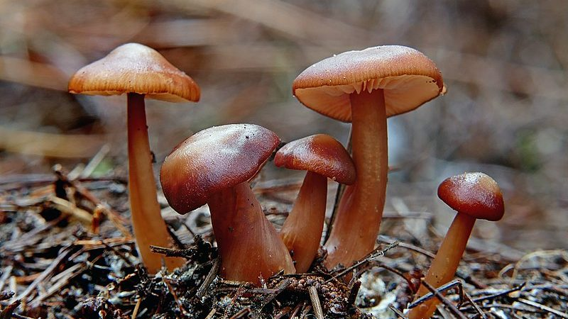 Understanding Underground Fungi Network For Fighting Global Warming