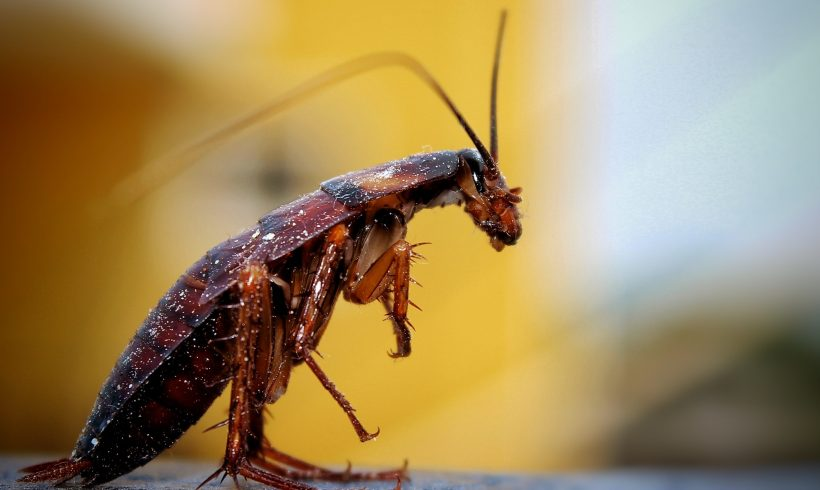 Your Clear Windshield Might Be A Sign Of Insect Apocalypse