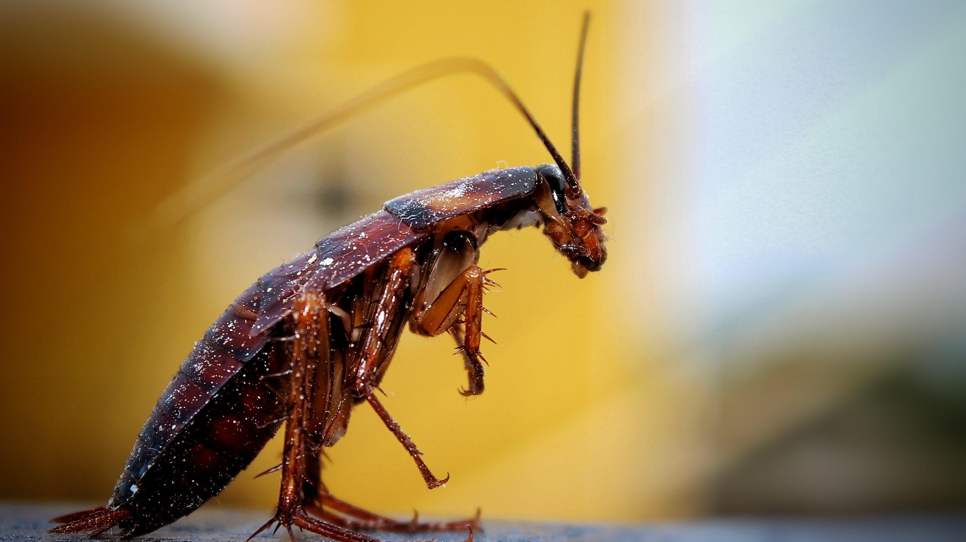 cropped-cockroach-.jpg