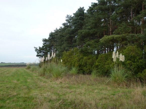 trees (Geograph)