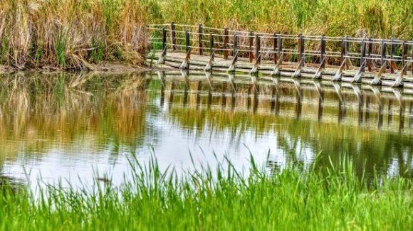 cropped-wetlands-1.jpg