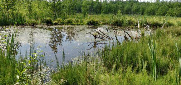 wetlands (3)