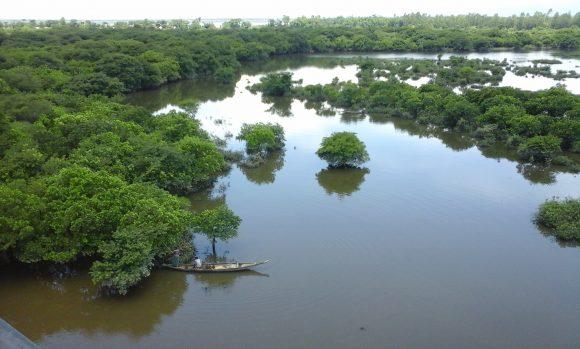 wetlands (4)