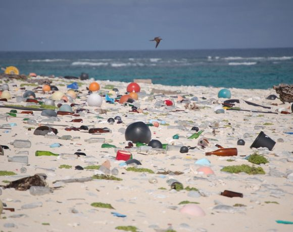 Our Plastic Waste On Land Is Harming Soil Species Too