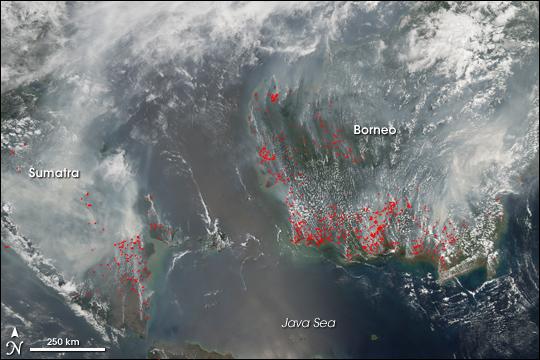 Borneo Forest Fire (NASA)