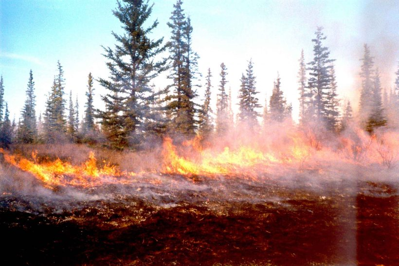 Our Forests Are Burning: Is It A Cycle Or A Disaster?