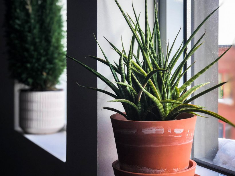 Having Plants is Easier Now With These Sustainable, Self-Watering Pots