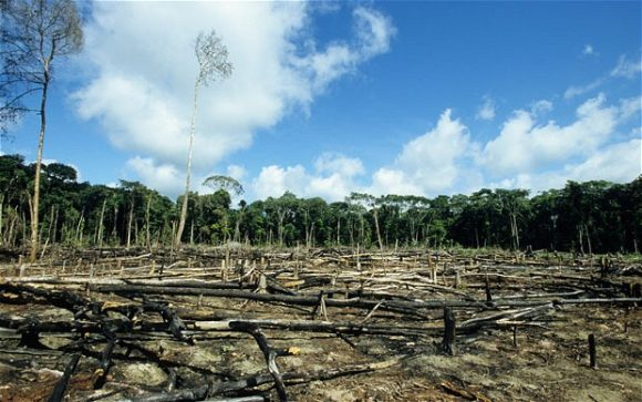 Deforestation (Wikimedia Commons)