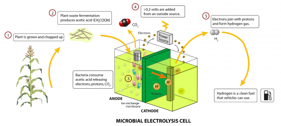 Microbial_electrolysis_cell (Wikimedia Commons)