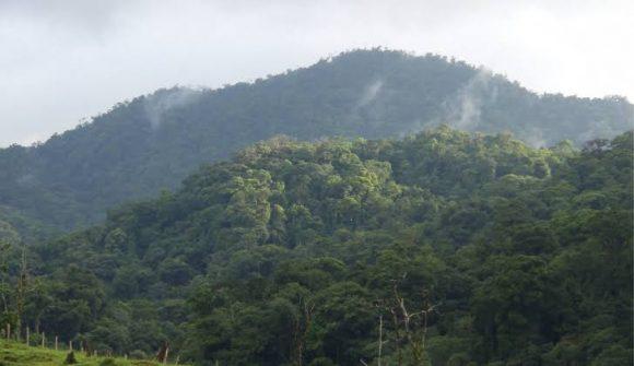 honduras rainforest (wikimedia commons)