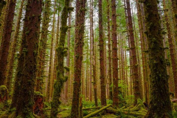 lush trees forest bathing