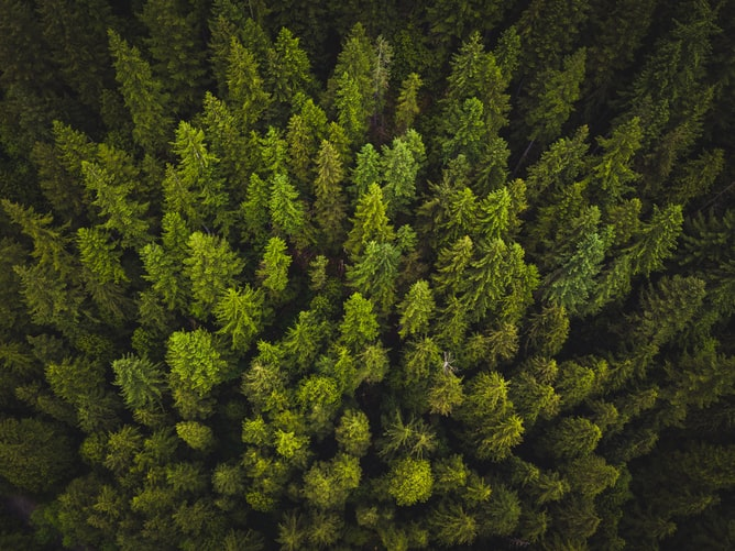 In Case You Didn't Know: Evidences of How Trees Restore Ecosystem