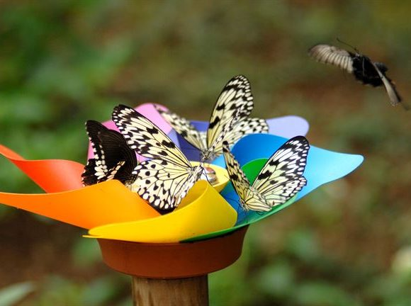 How Butterfly Can Maintain Their Beauty In This Cruel World