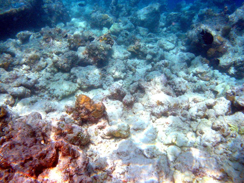 Moofushi_bleached_corals (wikimedia commons)