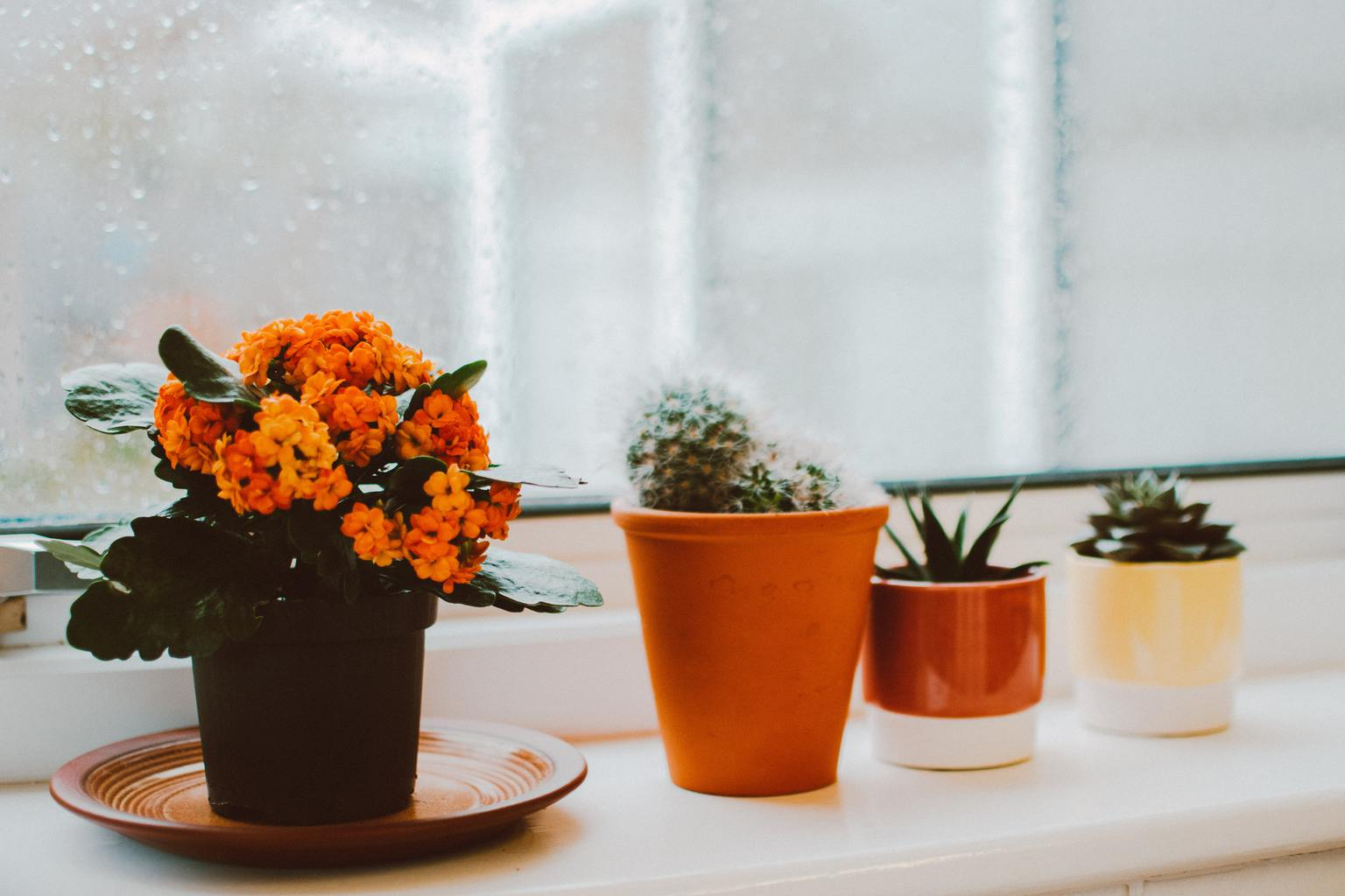 give potted plants on valentine's day
