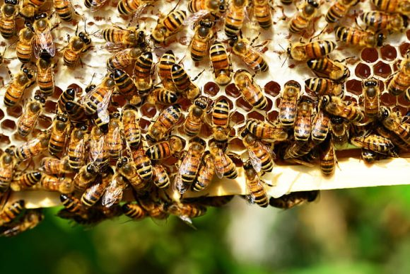 honey-bees-bees-hive-bee-hive-preview