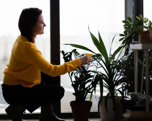 Feeling Stressful During Self-Quarantine? Grow Houseplants!