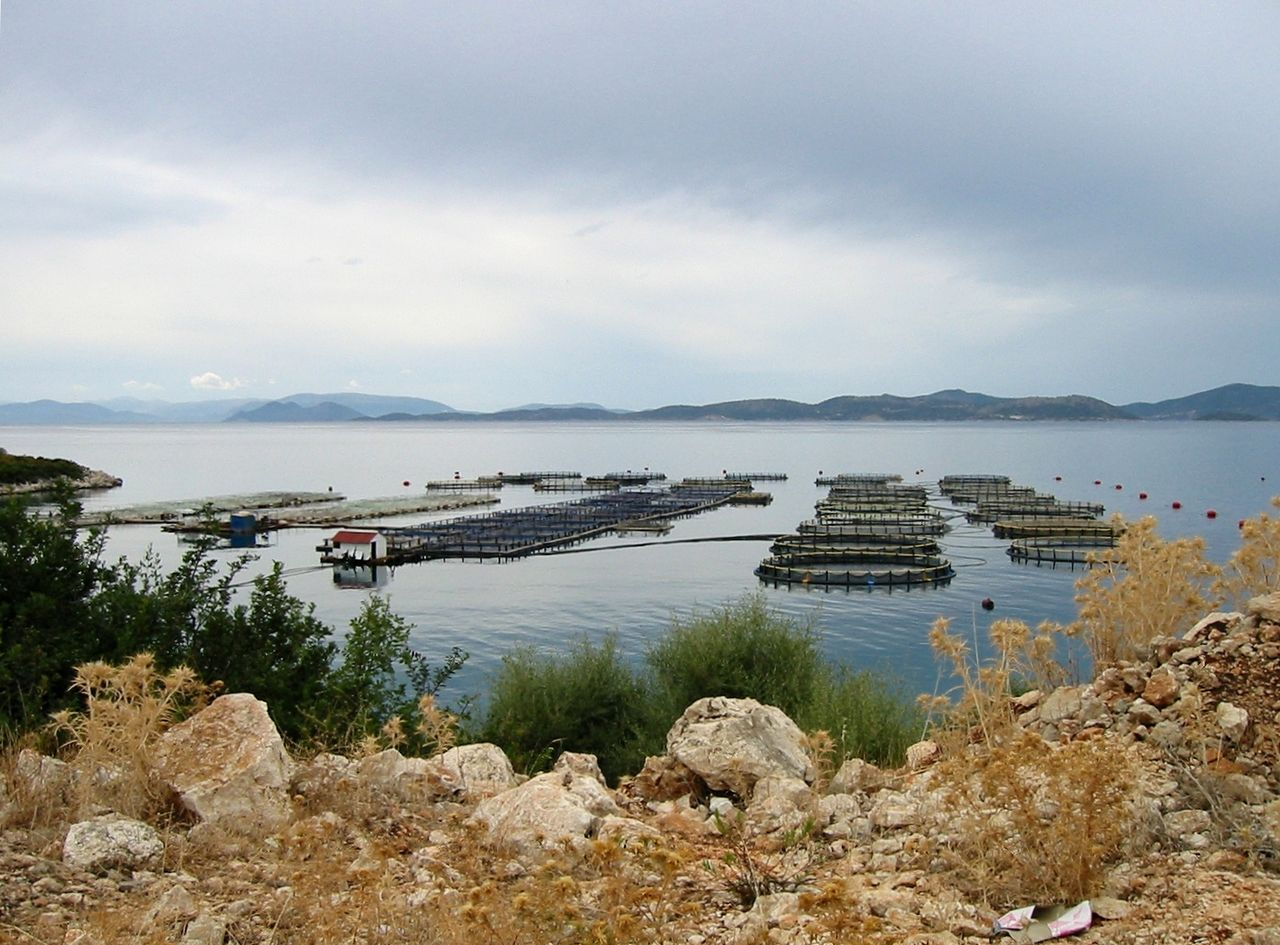 aquaculture in Western Greece. Photo by AlMare Wikimedia Commons