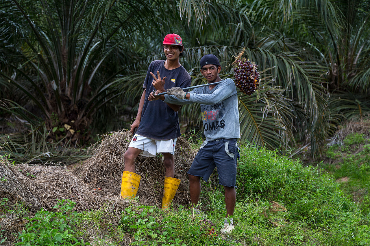 Palm oil plantation workers in Kmanis, Sabah. Photo by CEphoto, Uwe Aranas / CC-BY-SA-3.0