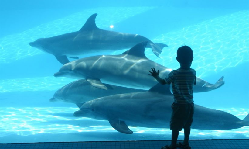 These Dolphins Miss Us So Much During Coronavirus Lockdown