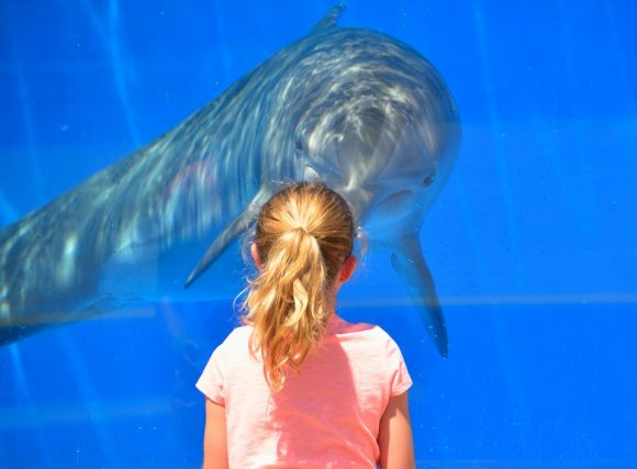 dolphins & kid