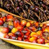 Palm Oil Understandably Gets a Lot of Hate, Here's Another Side of the Story
