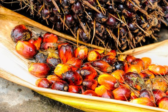 another side of palm oil industry