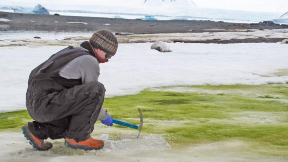 Dr. Matt Davey at Lagoon Island, Antarctica by Sarah Vincent