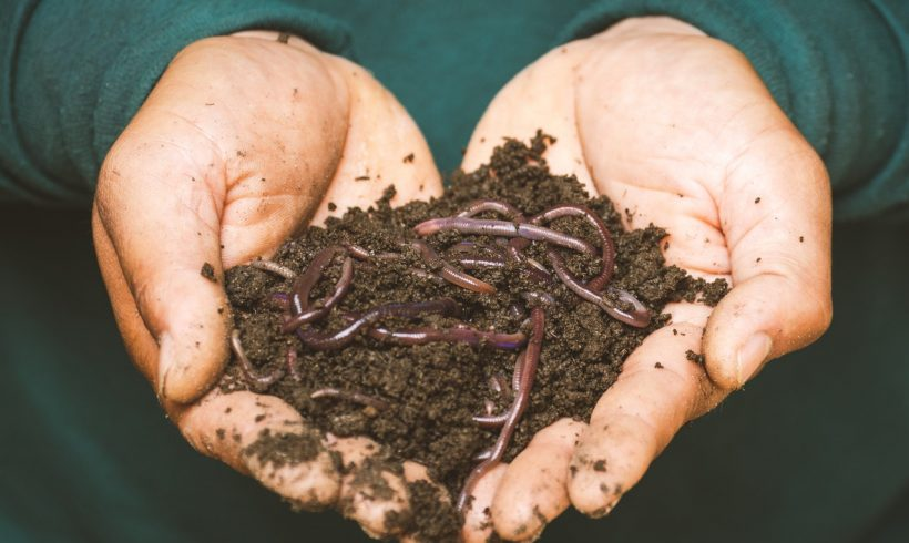 If You Want it, You can Now Turn Your Deceased Bodies into Compost