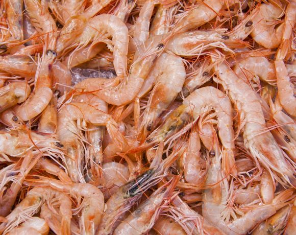 Shrimp Shells are not Only for Plastic Now, but Also Batteries