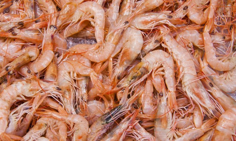 See How Shrimp Farming Can Become Environmentally Friendly
