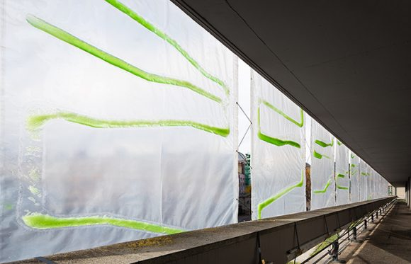 algae curtain 2