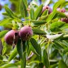 Copenhagen Is Planning To Plant Fruit Trees In Public Spaces