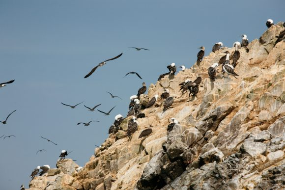 seabirds colony
