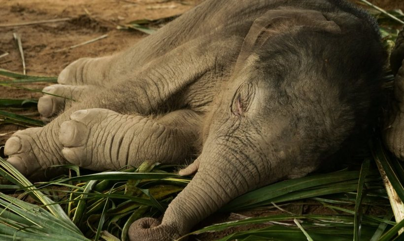 What Caused The Strange Death Of Hundreds Of Elephants In Botswana?