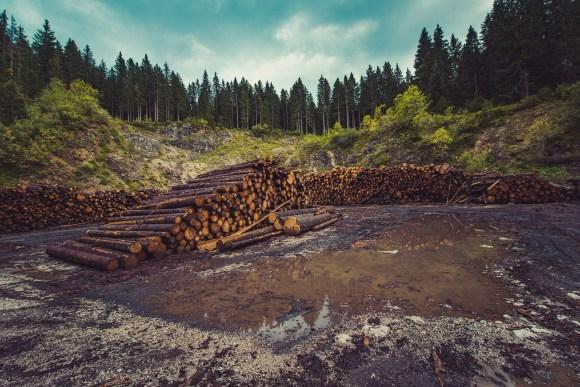 A Century of Logging Has Made Myanmar Struggle Preserving Teak Groves