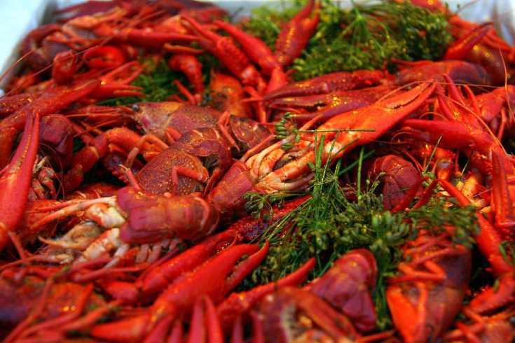 Binge Eating This Invasive Crayfish Doesn't Help, Study Says