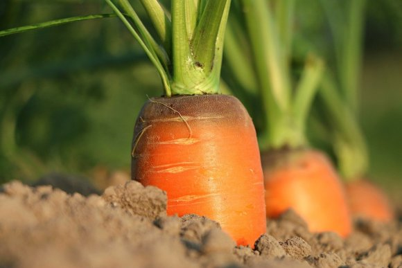 the future of gardening or agriculture industry may get more natural