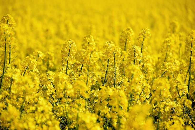 Researchers Found That We Can Utilize Virus and E. coli for Plants
