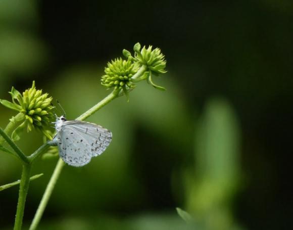 pollination 2