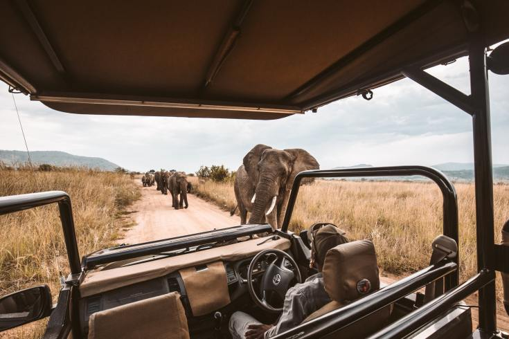 Love Animals? Virtual Safari Tours Can Help Support Wildlife Conservation in Africa