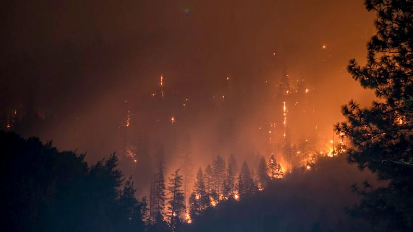 Covid-19 Is Another Reason Why We Should Prevent Forest Fire